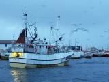 Fiskerinæringen og valg