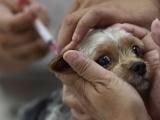 EØS hindrer tiltak mot rabies