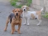 Gatehunder truer folkehelsen